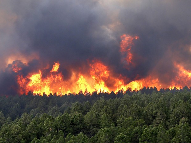 incendios-florestais.jpg