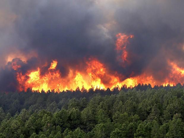 incendios-florestais.jpg