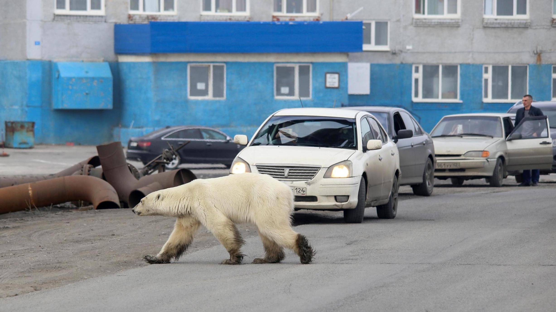 polar-bear-23a5